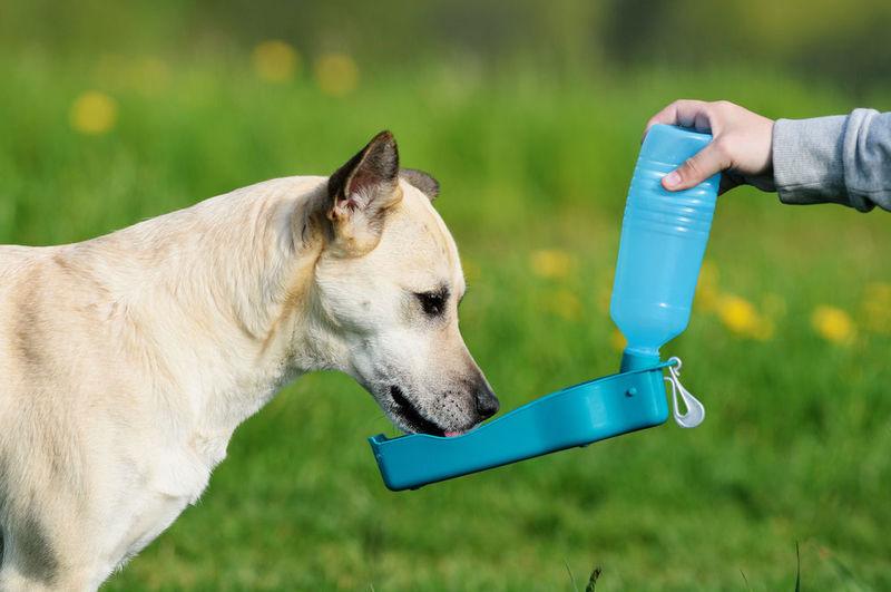 hadith thirsty dog